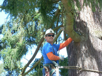 chet doing tree service - Edmonds